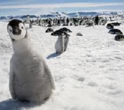 Праздник пингвинов?