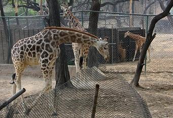 Делийский зоопарк
