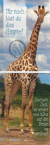 жирафа-мать