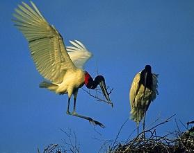 Storche