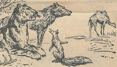 Der Wolf, der Tiger, der Fuchs und das Kamel