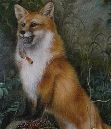Fuchspapa
