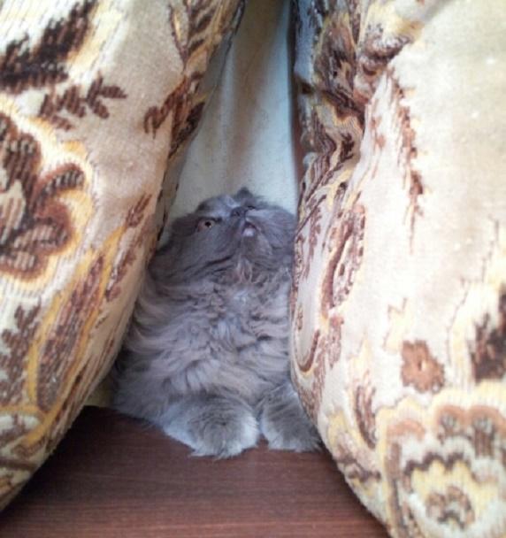 Кто-то подсматривает