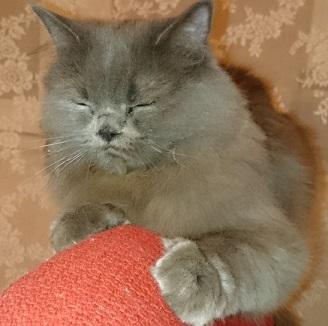 Ох, дайте вздремнуть после сытного обеда!